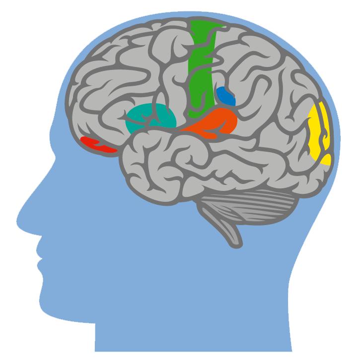 Was macht das Gehirn? | Klinikum Esslingen